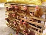 Bộ Công Thương chỉ định 12 cơ quan kiểm tra thực phẩm nhập khẩu