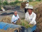 Bạc Liêu: Giá lúa tăng, dân hết lúa để bán