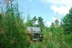 Chưa xác định được giống 'cỏ lạ' ở Trà Vinh