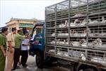 Tràn lan các điểm giết mổ mất an toàn thực phẩm