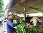Nông dân giỏi An Giang có tổng thu nhập trên 20.000 tỷ đồng