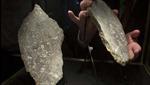 Đấu giá đá trên Mặt Trăng, sao Hỏa