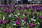 Lung linh lễ hội hoa Floriade ở Australia