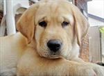 Bà chủ để lại cả triệu USD cho chó cưng