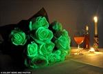 Hoa phát sáng trong bóng tối