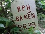 Gây thiệt hại nghiêm trọng, giám đốc rừng phòng hộ bị giáng chức