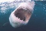 Cá mập tấn công người lướt ván