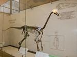 Phát hiện khủng long lông vũ tại Bắc Mỹ