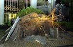 Hình ảnh bão số 8 gây thiệt hại tại Ninh Bình