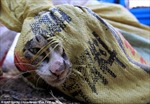 Cứu 500 con mèo khỏi nhà hàng 'tiểu hổ'