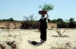 Việt Nam còn 9,3 triệu ha đất hoang mạc hóa