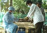 Quảng Ngãi khống chế xong dịch cúm gia cầm