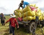 Xuất khẩu gạo đạt mức kỷ lục - niềm vui chưa trọn