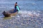 Tiếp tục tháo gỡ khó khăn cho cá tra