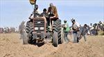 Tổng thống Bolivia cày tịch điền trồng 'hạt vàng'