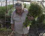Uruguay sẽ sản xuất nước hoa xa xỉ nhất hành tinh