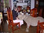 Ngắm nhìn 'tê giác cưng' trong nhà
