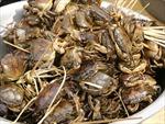 Không phát hiện thuốc trừ sâu trong mẫu cua đồng