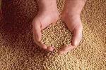 Phát hiện 5 tấn thức ăn chăn nuôi lậu
