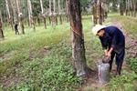 Đất đai các nông, lâm trường - Cần giải pháp quản lý, sử dụng hiệu quả