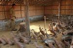 Thêm một ca tử vong vì cúm gia cầm tại Indonesia