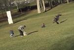 Xem chim ưng quắp em bé trong công viên