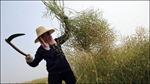 Trung Quốc chú trọng phát triển nông nghiệp