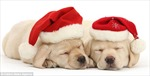 Chùm ảnh động vật dễ thương với chủ đề Giáng sinh