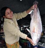 Xuất hiện nhiều loại cá to, quí, giá bán rất cao