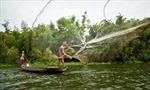6 loài cá ở Búng Bình Thiên có tên trong Sách Đỏ