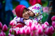 Rực rỡ Lễ hội hoa tulip lớn nhất thế giới