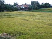 Xuất khẩu gạo còn nhiều khó khăn