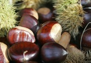 Thăng trầm đặc sản hạt dẻ Trùng Khánh