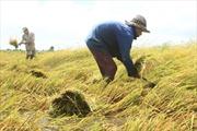 Nông nghiệp còn nhiều trăn trở
