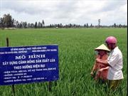 Nâng cao giá trị lúa gạo xuất khẩu