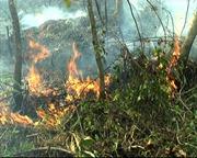 Cảnh báo cháy rừng cấp 5 trên đảo Phú Quốc