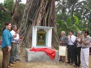 Cây đa đình Lâm Sơn-Quảng Ngãi là cây 'Di sản Việt Nam'