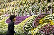 Tổng thống Hàn Quốc một lần nữa xin lỗi về thảm họa phà Sewol