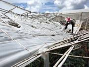 Lốc xoáy làm tốc mái 41 căn nhà