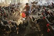 Bệnh nhân đầu tiên trên thế giới tử vong vì cúm gia cầm H5N6
