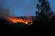Bình Định dập tắt đám cháy rừng nghiêm trọng