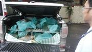 Bắt ô tô chở 220 kg tê tê trái phép