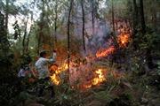 Nguy cơ cháy rừng cao ở Nam Trung bộ do thời tiết khô nóng