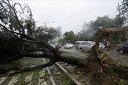 Bão Rammasun gây nhiều thiệt hại tại Philippines