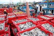 Nghiệp đoàn nghề cá giúp ngư dân yên tâm bám biển