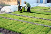 Gỡ khó cho những cánh đồng mẫu lớn ở Phú Thọ