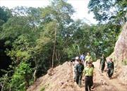 Đoàn giám sát Ban Chỉ đạo Tây Nguyên làm việc với các đơn vị quản lý bảo vệ rừng tại Kon Tum