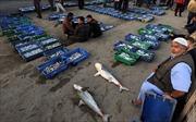 Israel bỏ một phần lệnh cấm đánh cá ở Gaza