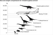 Hóa thạch khủng long năng hơn Boeing 737