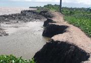 Mưa dông gây sạt lở toàn tuyến đê biển Tây, Cà Mau